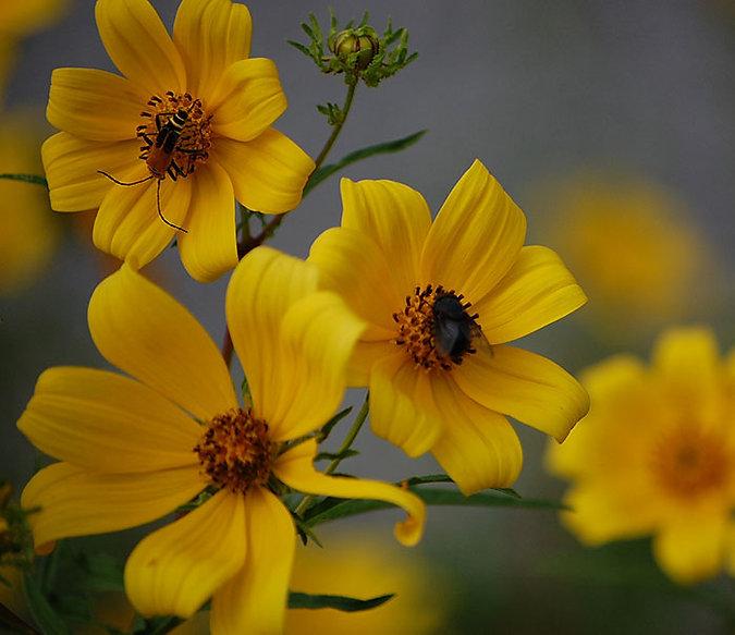 pollinator-resources-crop.jpg