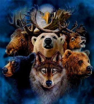 spirit-animals.jpg