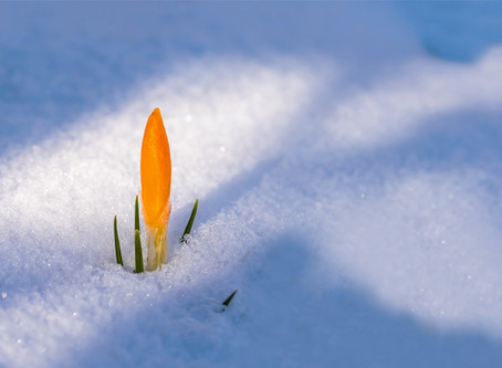 Waiting for Spring...