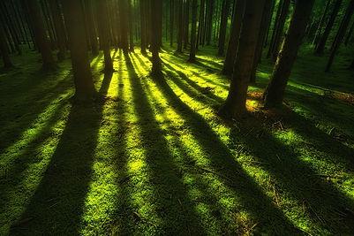 nature-3801537_1280.jpg