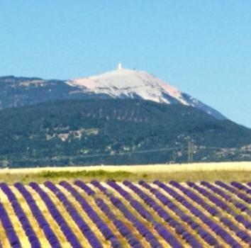 Mont Ventoux et Lavandes