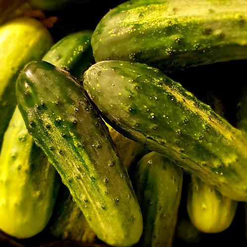 Pickler Cucumber