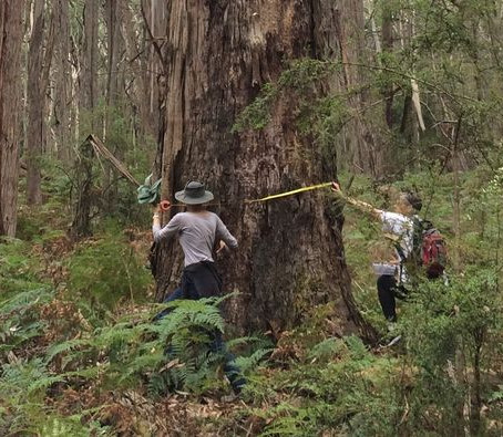 BEAM Rejects Logging Plans for the Tallarook Forest