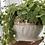 Thumbnail: Handbuilt houseplant pot