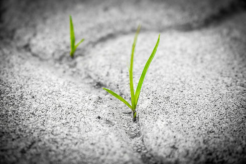 grass-1913167_1280.jpg