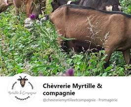 Chèvrerie Myrtille et Compagnie