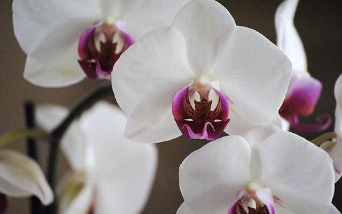 orchids-1094762-1920x1200.jpg