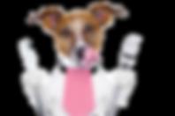 perro-comiendo_edited.png