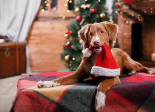 Navidad Perruna