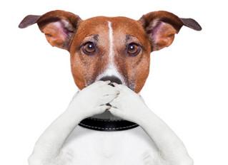 Cómo eliminar el mal aliento en un perro