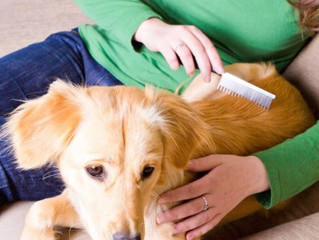 7 Consejos prácticos para disminuir la caida de pelo en perros