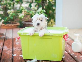 Cómo bañar a tu perro (y III)