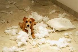 ¿Tu perro es muy nervioso? Aquí van unos trucos para relajarle!