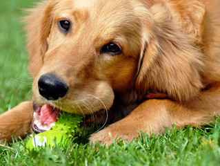 ¿Sabes cómo jugar con tu perr@?: Aprendiendo a jugar y a relacionarnos con nuestros perros
