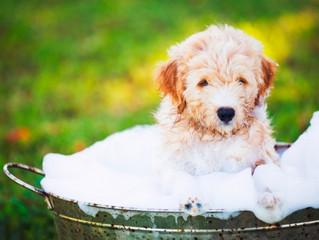 Cómo bañar a tu perro (I)