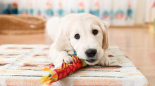 ¿Cuales son los mejores juguetes antiestrés para perros?
