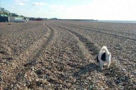 Crear una pista de rastreo para el perro en cinco pasos