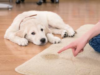 Trucos para evitar que mi perro orine dentro de casa