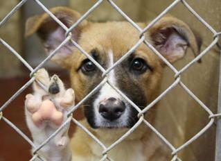 """Adopción de perros – requisitos, pasos y """"coste"""" orientativo"""
