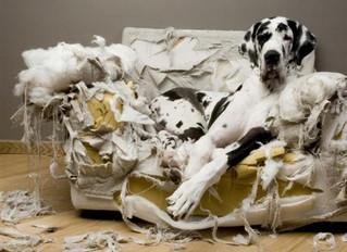 ¿Qué hacer para que tu perro no muerda en casa lo que no debe? - Trucos y consejos