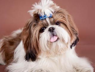 Tratamientos de aseo, higiene (y belleza) para perros