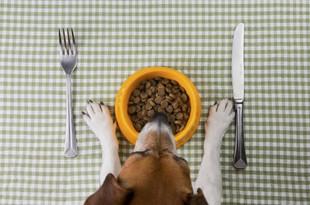 Alimentación del perro: mentiras y verdades