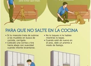 Obediencia canina: normas básicas para educar al perro en casa
