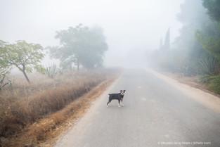 Cuidados del perro en otoño: muda del pelo y bajadas de defensas