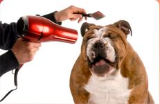 El perro en la peluquería: qué debemos explicar a los dueños