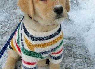 ¿Debo desparasitar a mi perro en invierno?