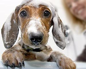 El baño del perro