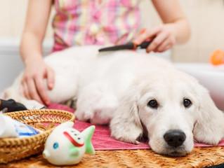 Cómo evitar que mi perro suelte mucho pelo - Trucos y consejos