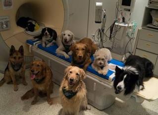 La ciencia lo ha comprobado: ¡Los perros entienden perfectamente cuando les hablamos!