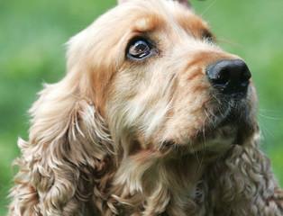 Esta primavera protege a tu perro con pipetas y collares anti-parásitos