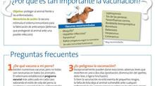 El plan vacunal canino