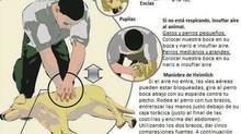 ¿Cómo hacer la RCP (reanimación cardio-pulmonar) a tu perro?