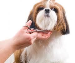 Peluquerías caninas: mucho más que estética