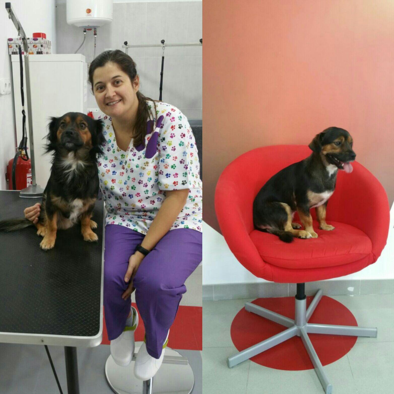 Pío (antes y después)