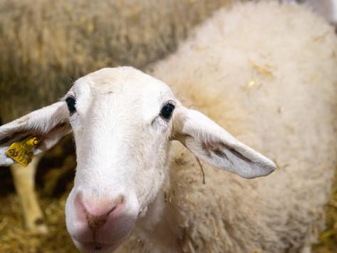 Las claves para reducir el estrés por calor animal
