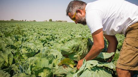 El Dorado Vegetable Farm