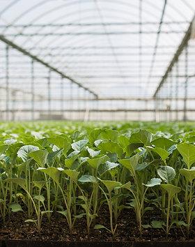 Farming | Agricultural Microbes | Raymond, AB