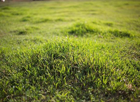 ACF-SR Lawn & Garden (1gal)