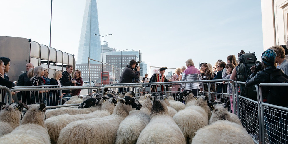 Celebration of the City of London's Annual Sheep Drive at Southwark Bridge / 26th September 2021