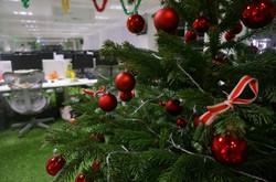 Christmas tree sale Bristol