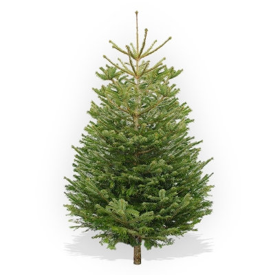 210-240cm low-drop Christmas tree