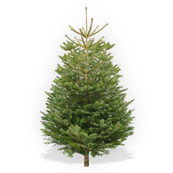 Christmas Trees Bristol: Bristol Christmas Trees, Christmas Tree Stands, Christmas