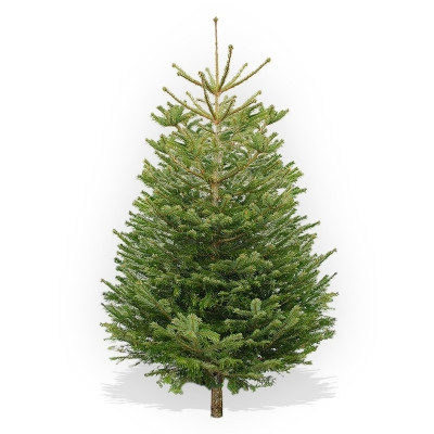 Christmas Tree Shop Home Delivery In Bristol