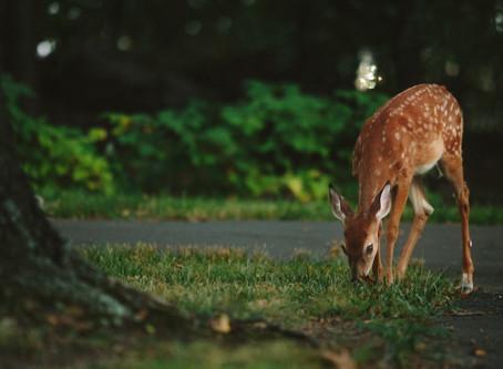 Supporting Avon Wildlife Trust