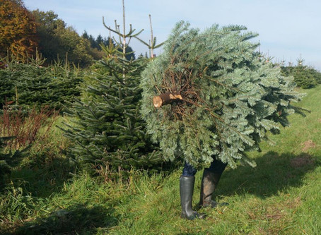 TIME TO CHECK THE CHRISTMAS TREES