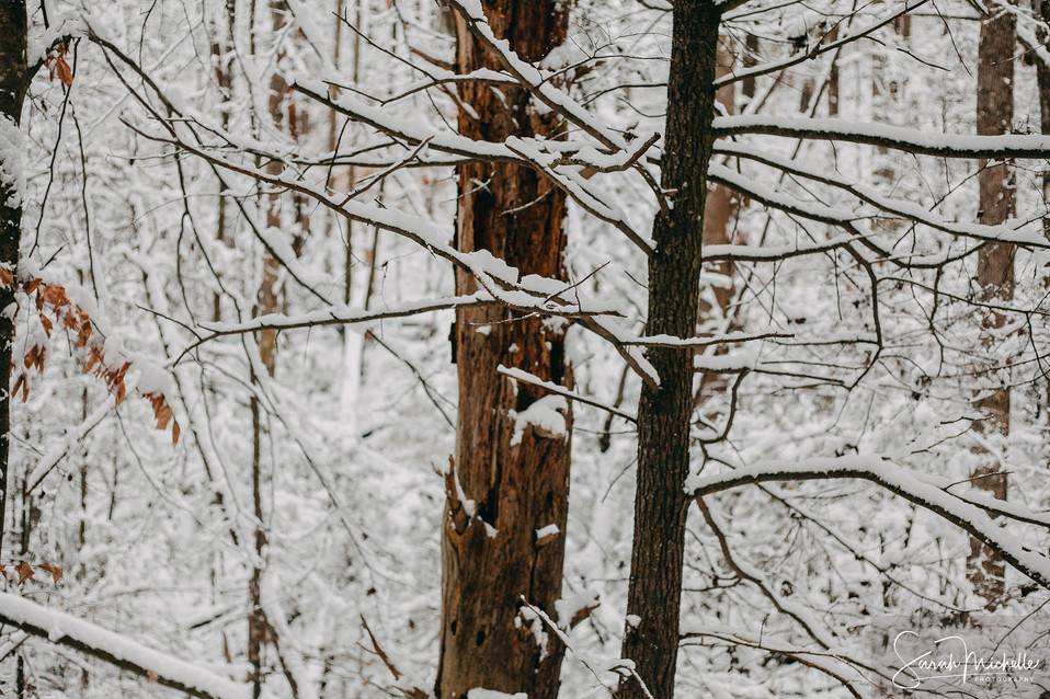 Wintery Trees in the Pisgah National Forest9 (WM).jpg